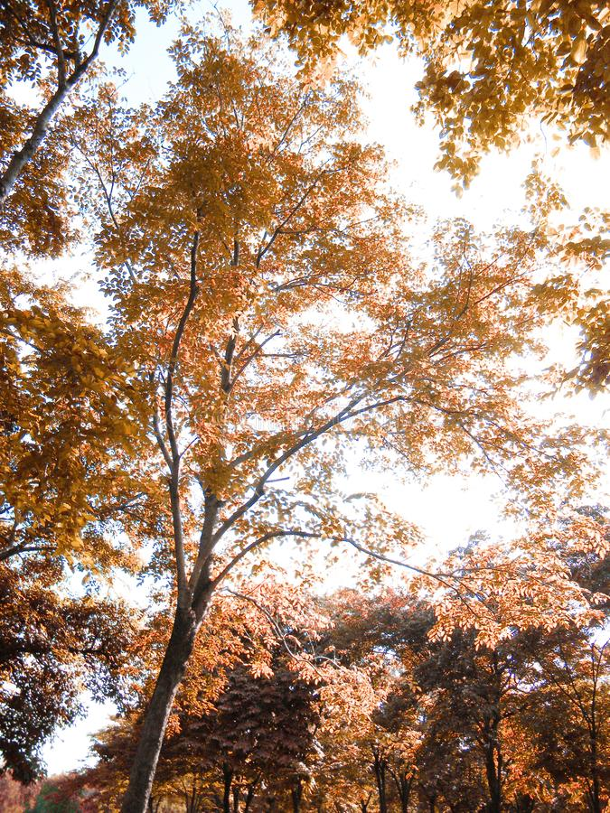 Autumn season with leaf in landscape background style stock image