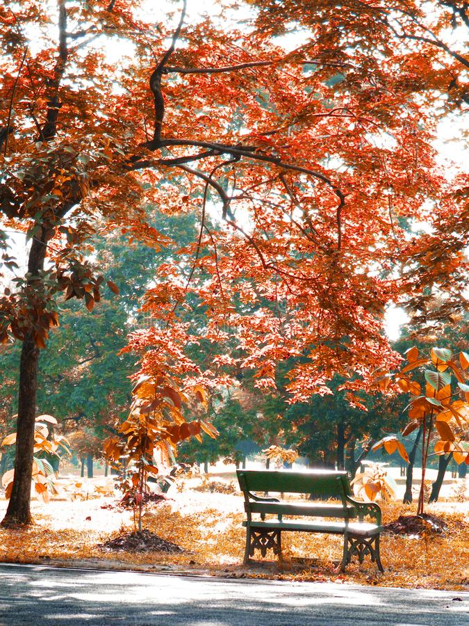 Autumn season with leaf in landscape background style royalty free stock photo