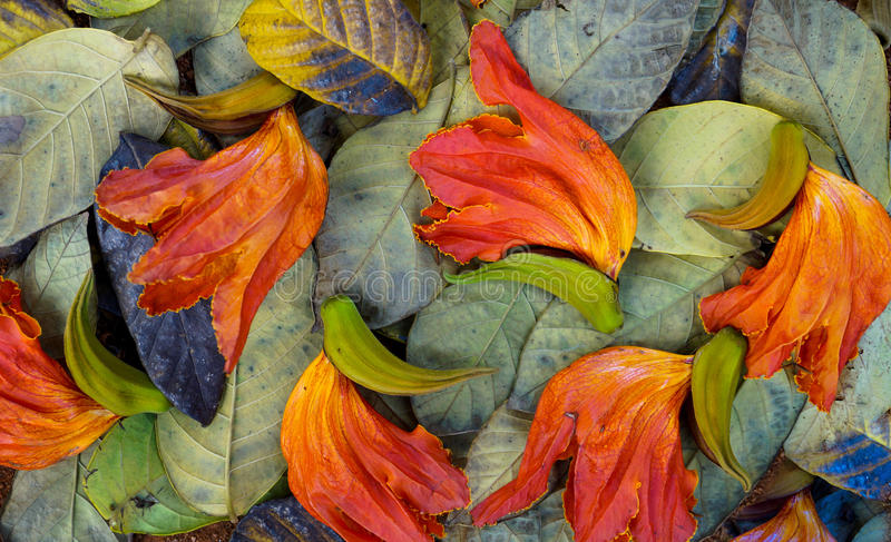 The autumn season leaves the colours of nature in leaves stock photos