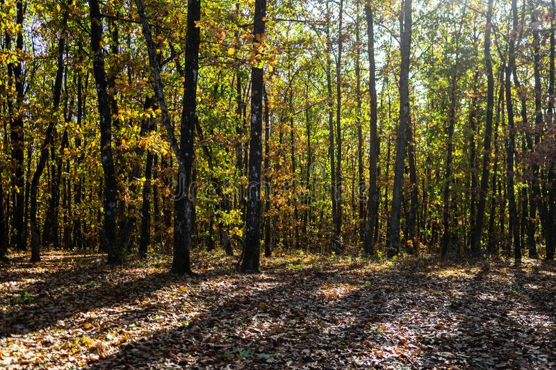 Autumn season with sunlight. Colorful trees and fallen leaves in autumn forest. Beautiful path in autumn forest.  royalty free stock image