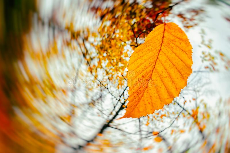 Autumn season. Wind blowing dry leaves royalty free stock images