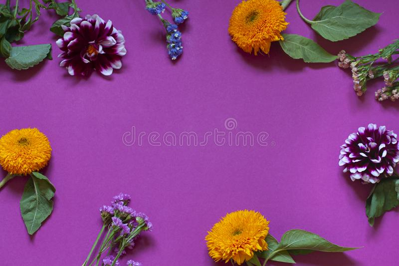 Autumn seasonal flowers flat lay on the purple background. stock images