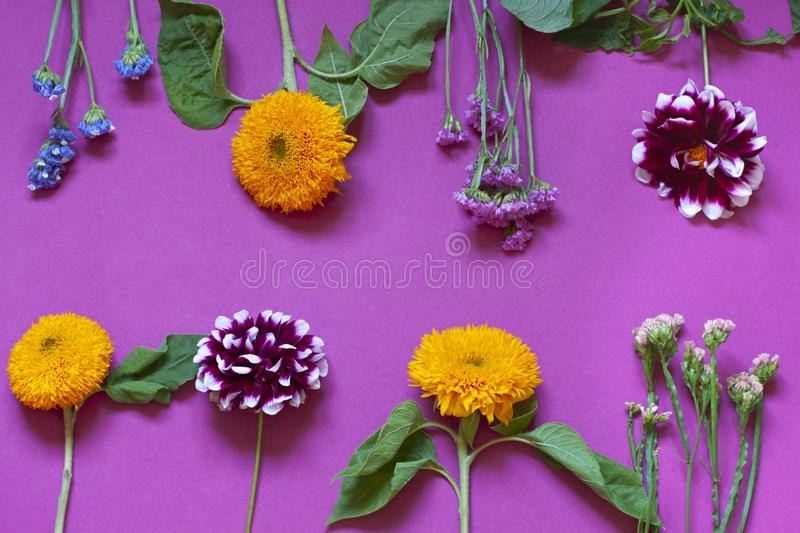 Autumn seasonal flowers flat lay on the purple background. royalty free stock photos