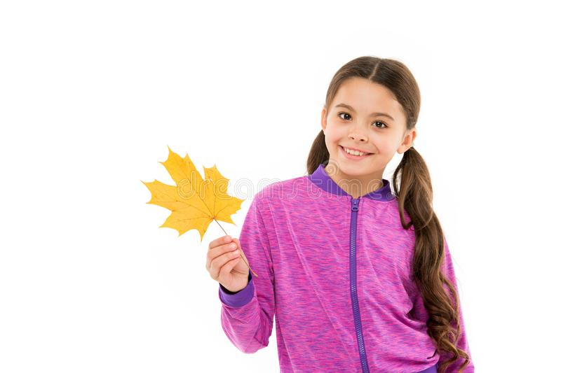Autumn is second spring when every leaf is flower. Kid girl hold fallen maple leaf. Happy small child play with autumn royalty free stock images