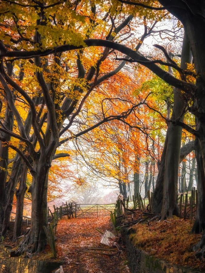 Autumn Secret Pathway royaltyfri foto