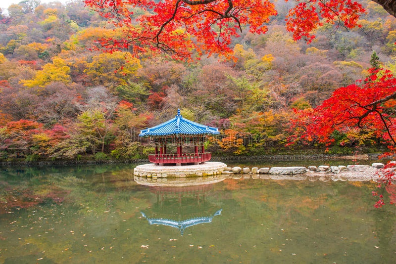 Autumn in seoul korea royalty free stock images