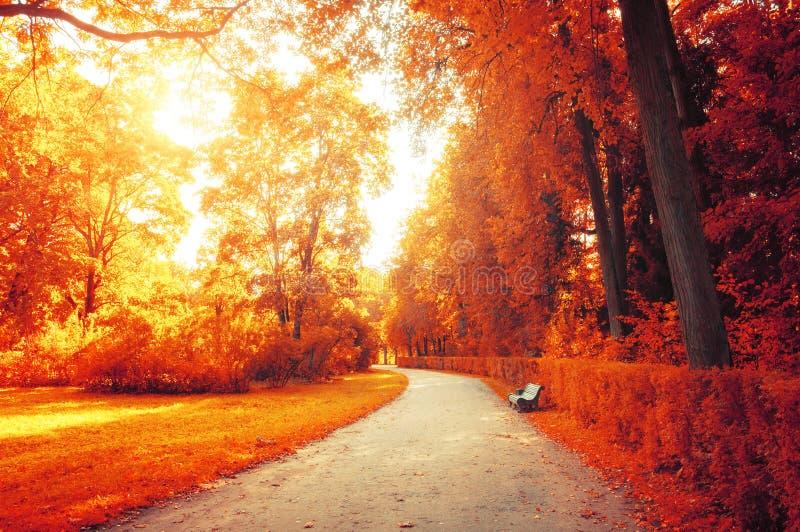 Autumn September-landschap Bank bij de de herfststeeg onder kleurrijke de herfstbomen royalty-vrije stock afbeeldingen