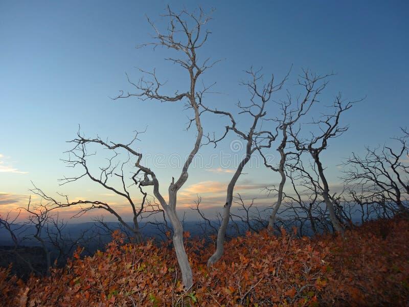 Autumn Serenity i Mesa Verde National Park, Colorado royaltyfri foto