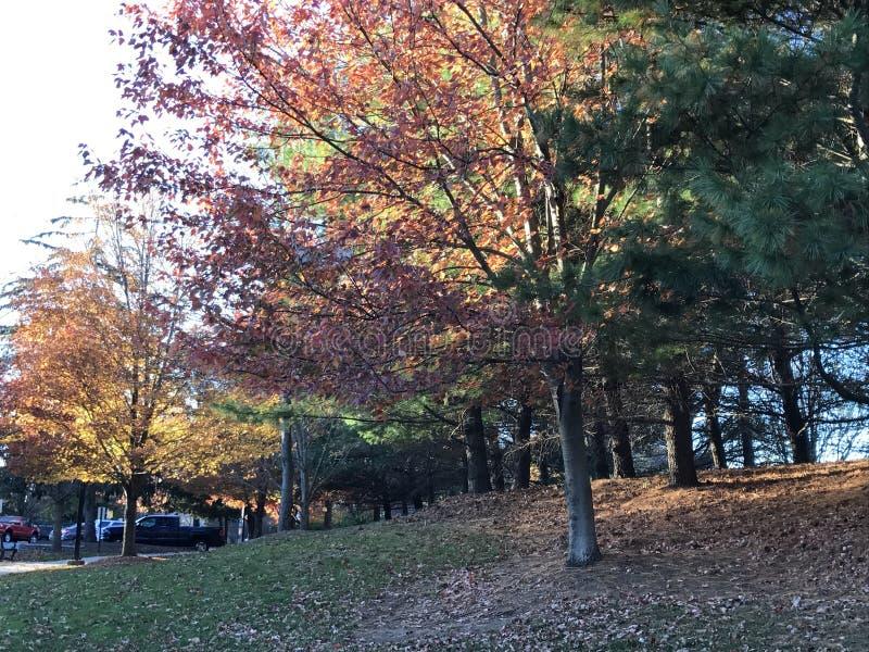 Autumn Shade photo stock