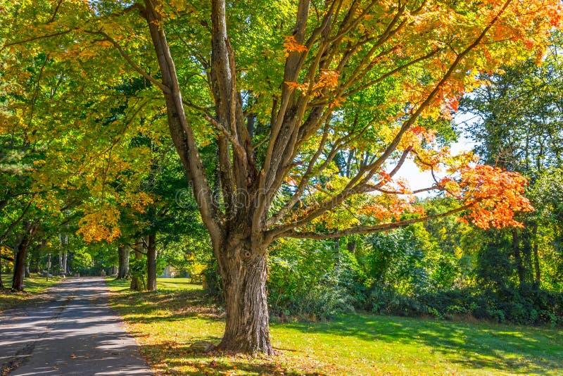 Autumn Shade Trees imagenes de archivo