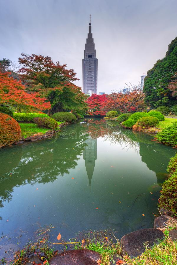 Autumn in the Shinjuku Park. Tokyo, Japan royalty free stock image