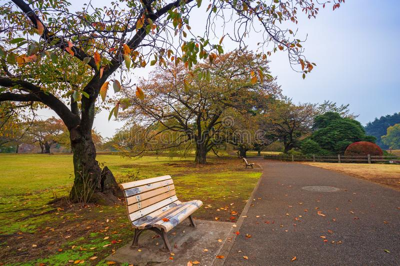 Autumn in the Shinjuku Park, Tokyo. Japan royalty free stock photos
