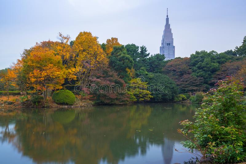 Autumn in the Shinjuku Park, Tokyo. Japan royalty free stock images