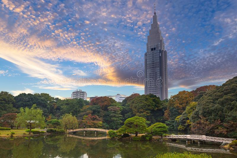 Autumn in the Shinjuku Park. Tokyo, Japan royalty free stock images