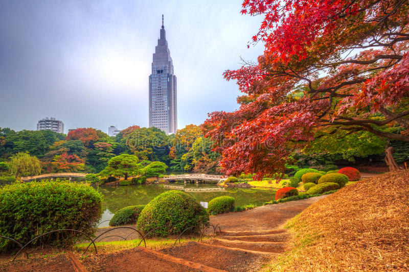 Autumn in the Shinjuku Park, Tokyo. Japan royalty free stock photo