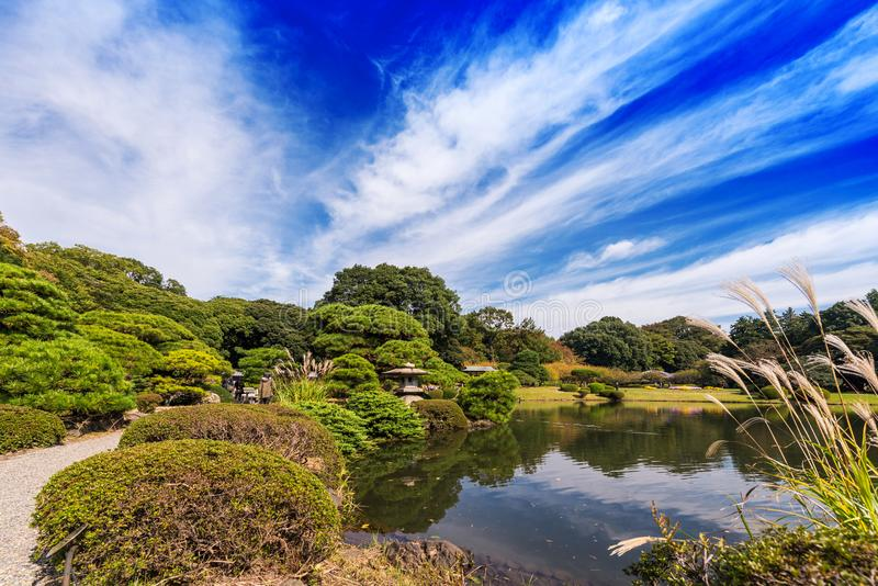 Autumn in the Shinjuku park, Tokyo, Japan. Copy space for text. royalty free stock photography