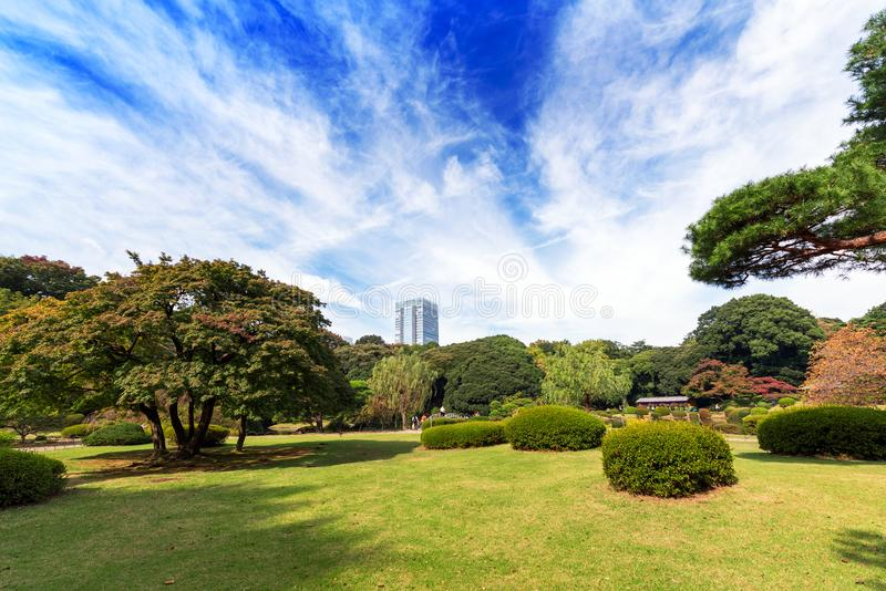 Autumn in the Shinjuku park, Tokyo, Japan. Copy space for text. Autumn in the Shinjuku park, Tokyo, Japan. Copy space for text royalty free stock photos