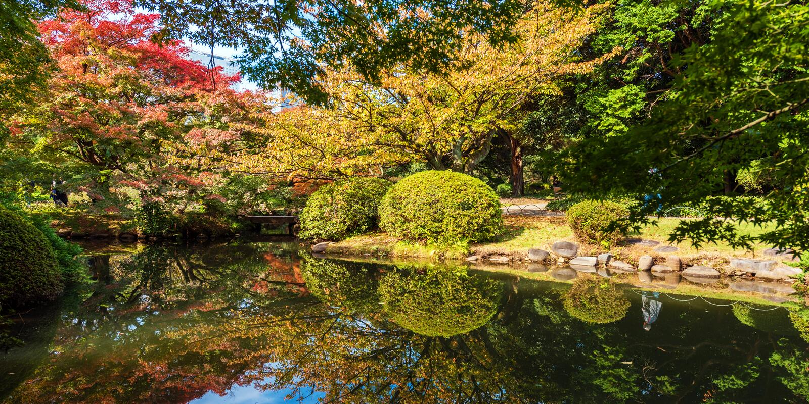 Autumn in the Shinjuku park, Tokyo, Japan. Copy space for text. Autumn in the Shinjuku park, Tokyo, Japan. Copy space for text stock image