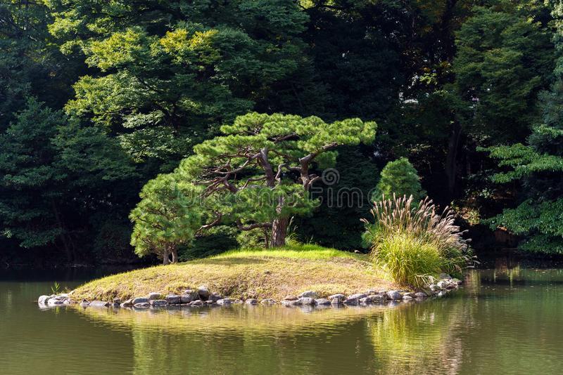 Autumn in the Shinjuku park, Tokyo, Japan. Copy space for text. stock image