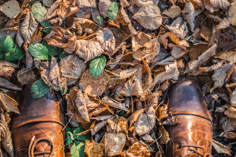 Autumn on shoes. Autumn in the mountains. turquoise and orange. beautiful weather. autumn forest. still life of foliage. leaf litter royalty free stock image