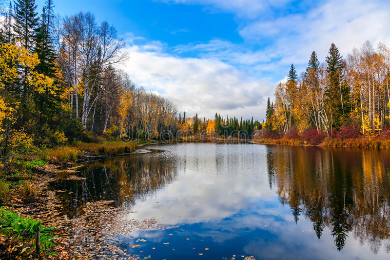 Download Autumn in Siberia stock image. Image of pine, outdoors - 28197653