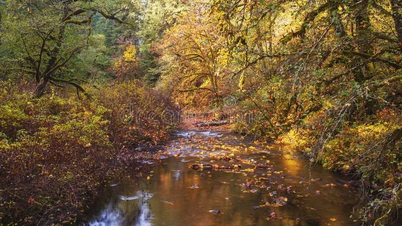 Autumn at Silver Creek at Silver Falls State Park stock image