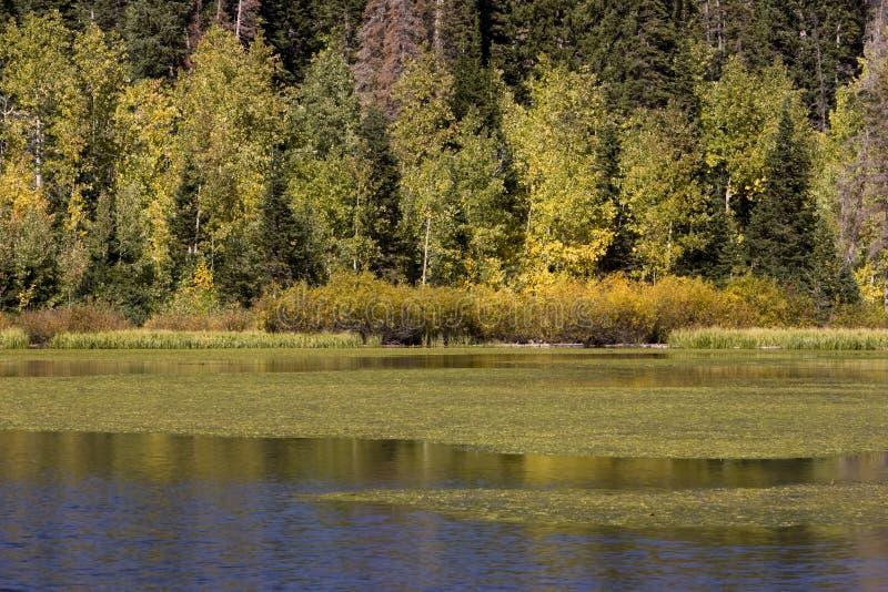 Autumn on Silver Lake