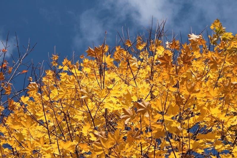 Autumn in sky stock photos