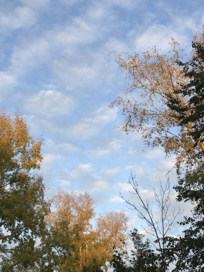 Autumn sky and trees stock image