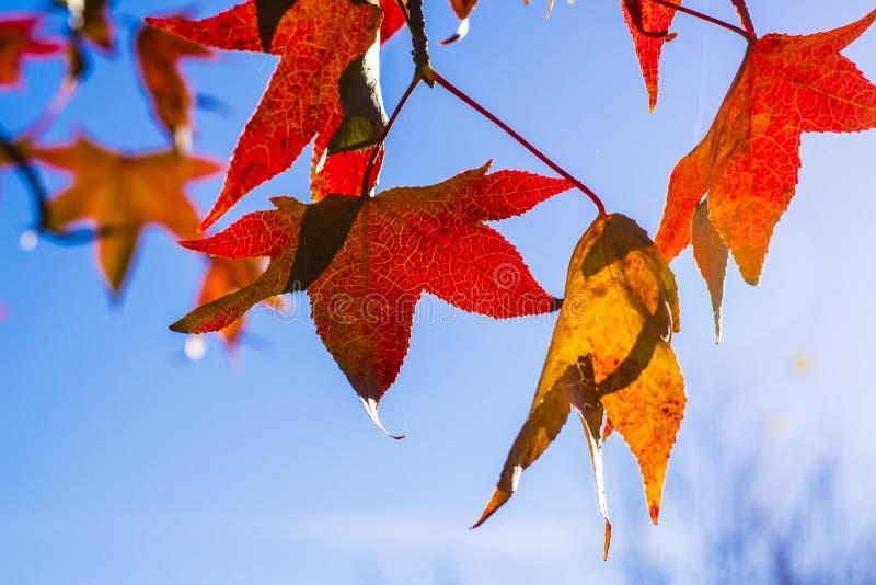 Autumn. A small representation of the autumn season through nature photography royalty free stock photography
