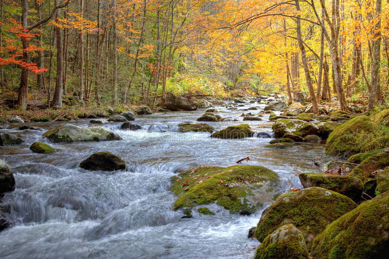Autumn Smoky Mountain stream. Beautiful Smoky Mountain stream in the Fall season, showing golden, red and green trees lining the stream and rushing water with royalty free stock images