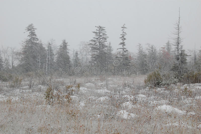 Autumn snow in Canaan Valley royalty free stock photography