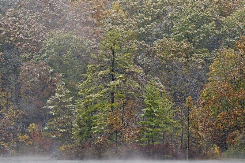 Autumn, Snowflocked Shoreline Hall Lake. Foggy autumn landscape of the shoreline of Hall Lake flocked with snow Yankee Springs State Park, Michigan, USA royalty free stock photos
