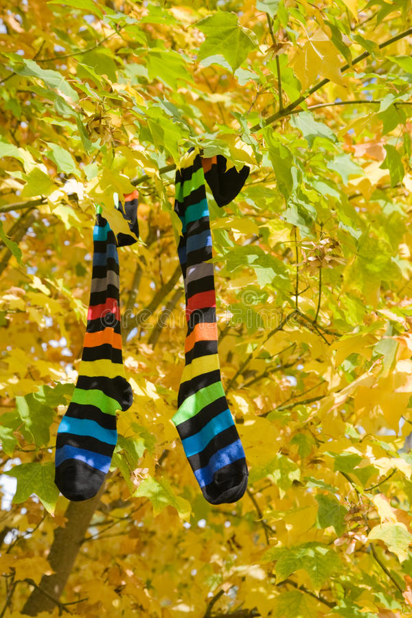 Download Autumn socks stock photo. Image of bright, autumn, long - 11134178