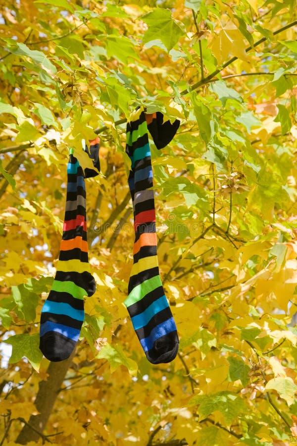 Autumn socks royalty free stock photos
