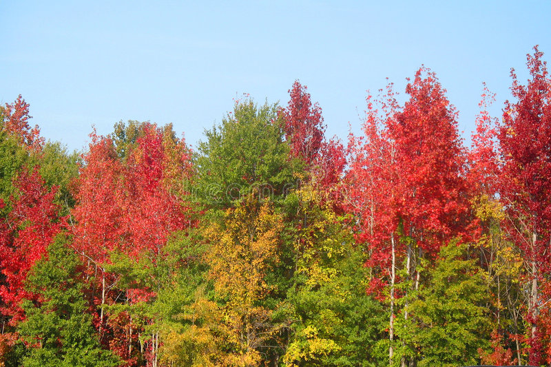 Autumn in South Carolina royalty free stock photos