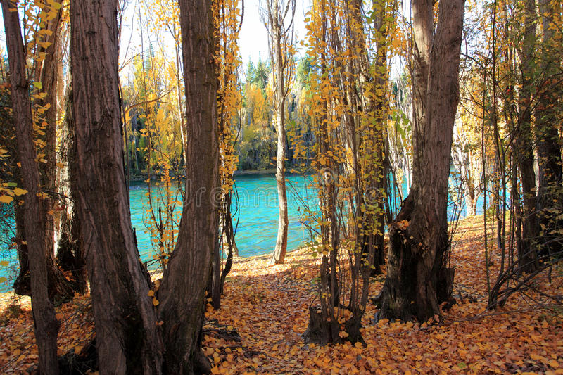 Autumn in South Island New Zealand. stock photography