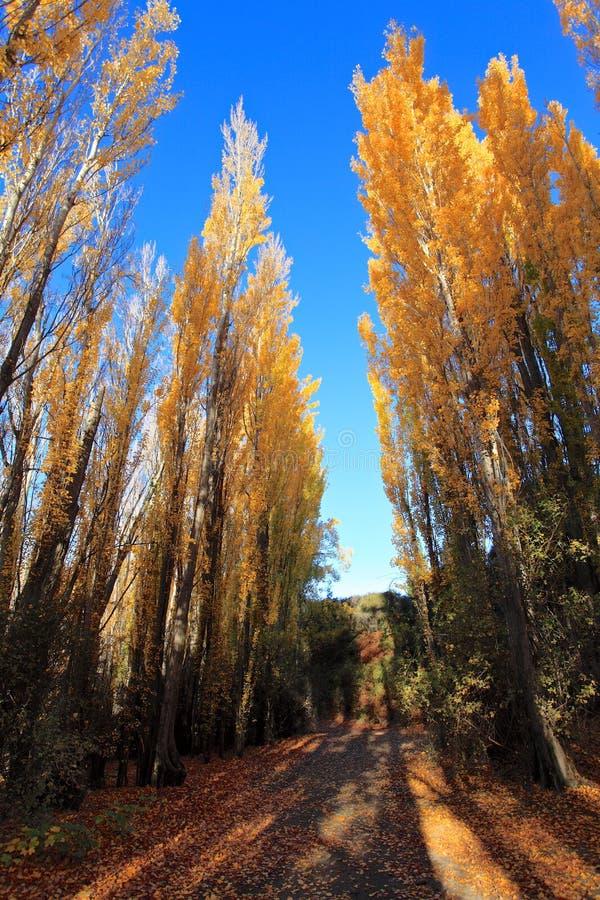 Autumn in South Island New Zealand. stock photos