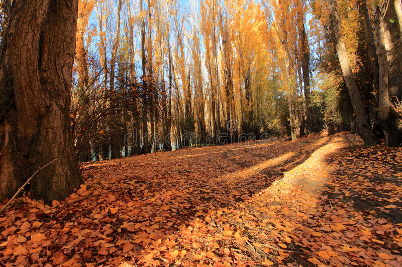 Autumn in South Island New Zealand. Autumn season travel in the South of New Zealand royalty free stock photo