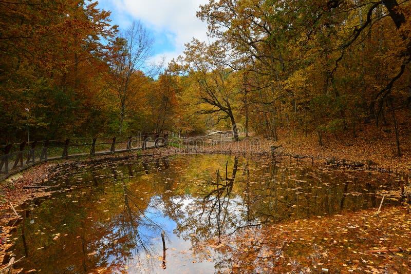Autumn. In Sovata Bai.Transilvania RO stock image