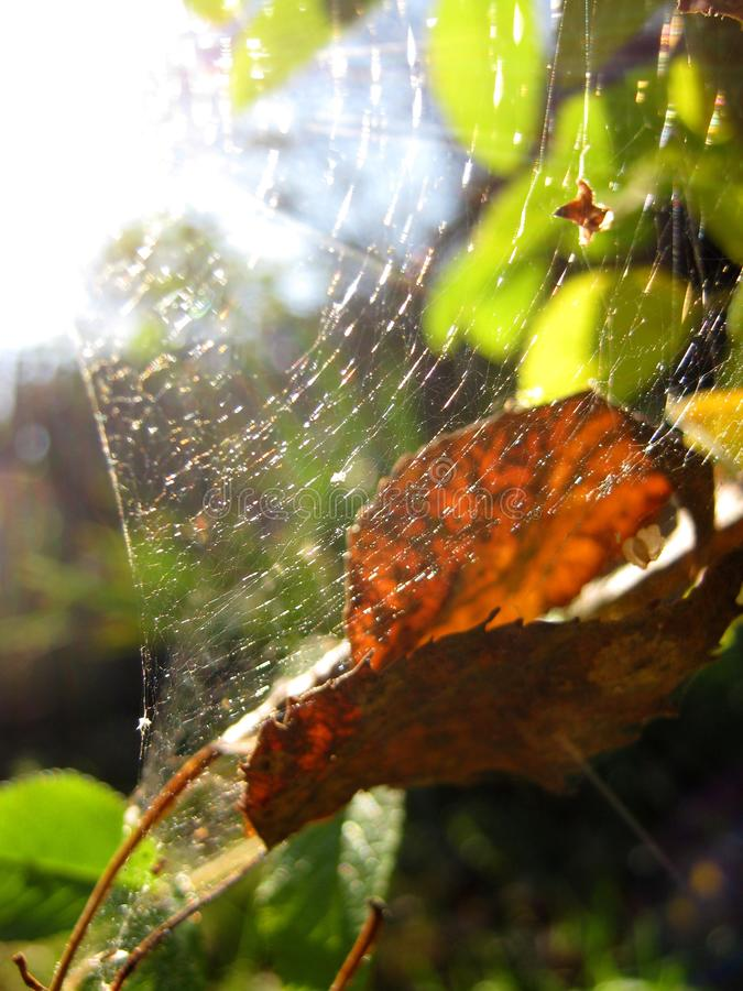 Autumn Spider Web image libre de droits