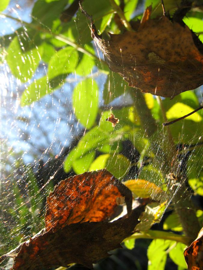 Autumn Spider Web images libres de droits