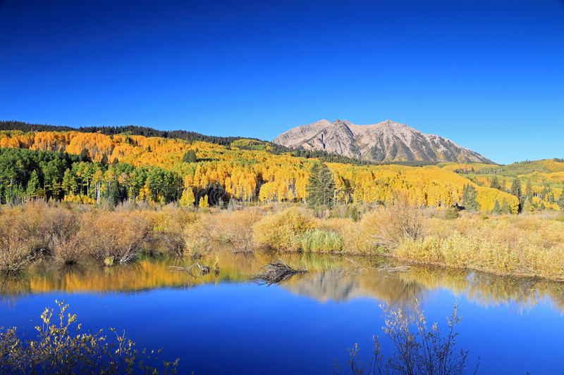 Autumn splendor at a beaver pond in the Rocky Mountains. royalty free stock photography