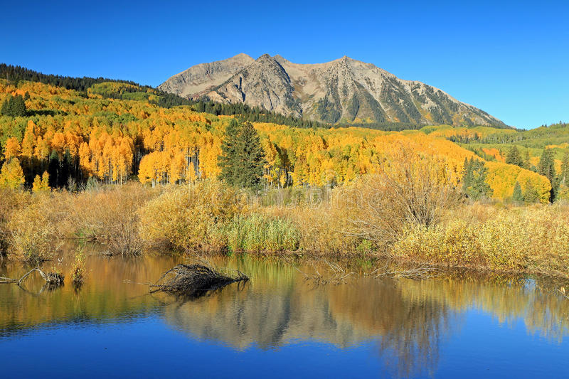 Autumn splendor at a beaver pond in the Rocky Mountains. stock image
