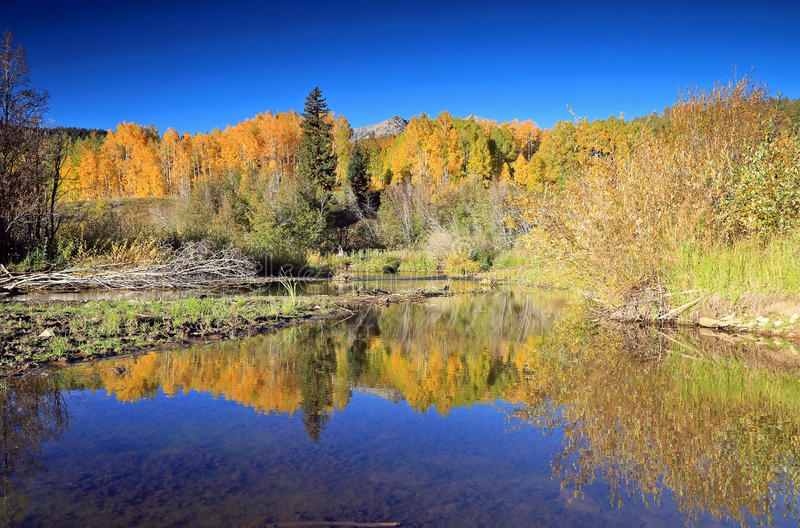 Autumn splendor at a beaver pond in the Rocky Mountains. stock images