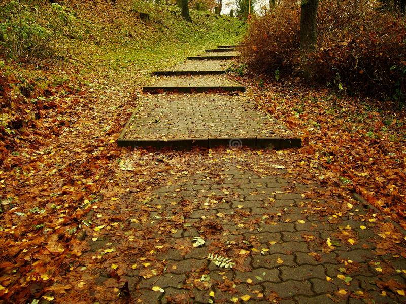 Autumn stairs stock photography