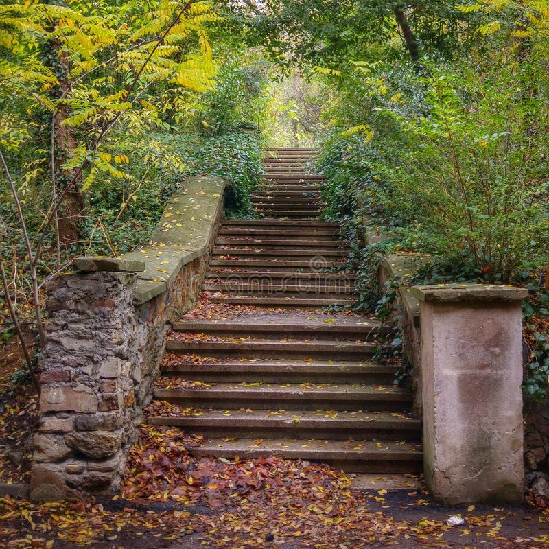 Autumn stairs royalty free stock photography