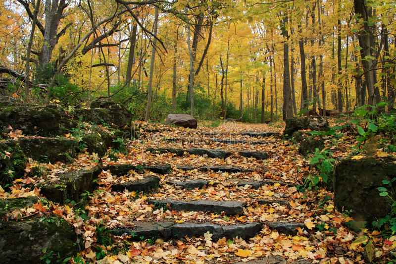 Autumn Steps royalty free stock image