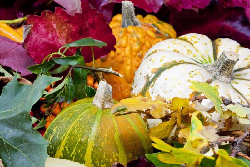 Download Autumn still life stock photo. Image of chestnut, season - 11273184