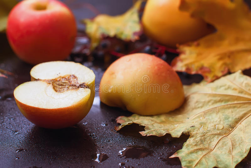 Autumn still life. apples and leaves in the rain stock photography